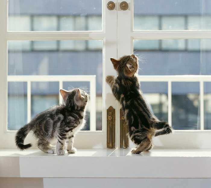 Ablakpárkányok